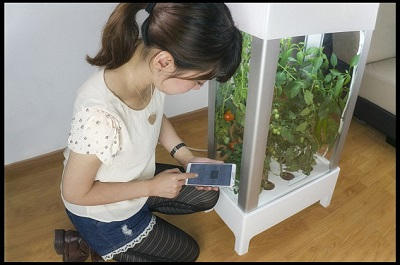 BNPS.co.uk (01202 558833) Pic: Niwa/BNPS Green-fingered geeks have invented the world's first greenhouse that can be controlled by a smartphone - so wannabe gardens can grow fruit and veg in their own homes. The revolutionary indoor gadget boasts a built-in miniature computer that detects when plants need water and the ideal temperature for their growth. The glass-sided device uses special sensors to pick up these readings which then automatically activate different parts of the machine. Users can sit back and relax as the device warms up, cools down, turns on a light or waters the plants. The contraption, which called Niwa, is controlled using an app on a smartphone.